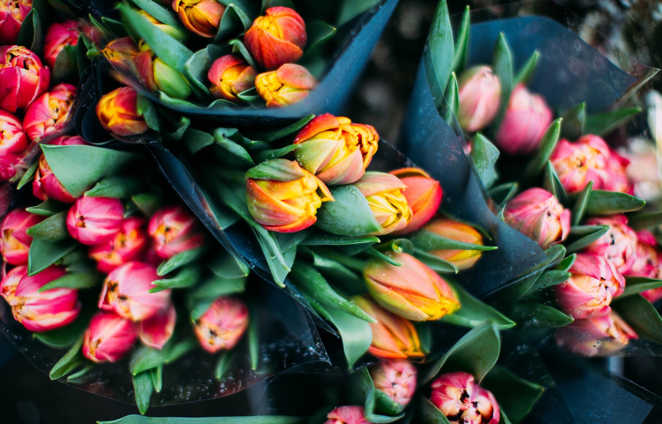 Gardenia_22
